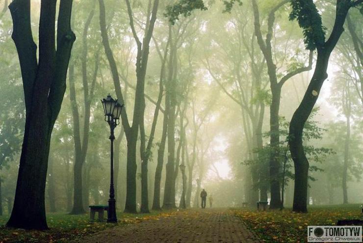 Aleja na Górce we mgle