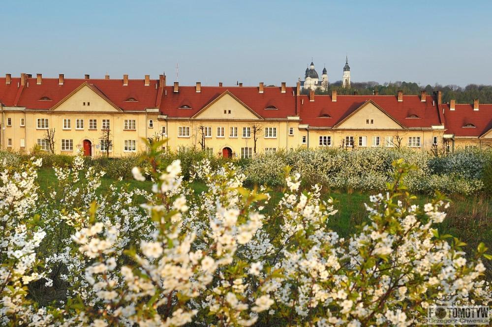 wiosenna fotografia ul. Wiejska w Chełmie