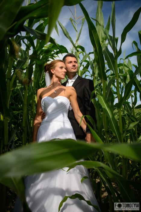 zdjęcia w kukurydzy